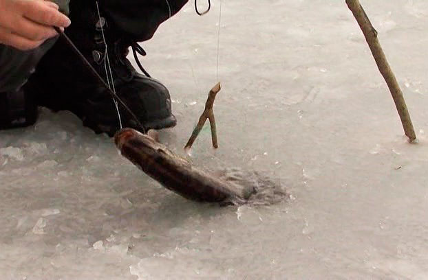 летние поставушки на щуку своими руками наша рыбалка видео